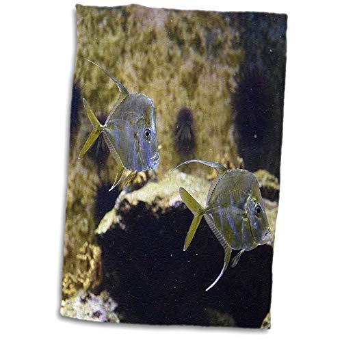 3dRose Susans Zoo Crew Animal - Lookdown Fish Swimming in Aquarium - 15x22 Hand Towel (TWL_294865_1)