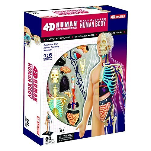 4D Vision Half Cleared Human Anatomy Model