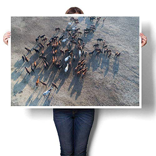 Mannwarehouse Canvas Prints Wall Art Wild Horses of Anatolia Aerial View Photography Decorative Fine Art Canvas Print Poster K 48