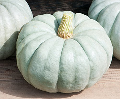 Large Blue Jarrahdale Pumpkin Seeds - One of the Most Interesting and Decorative Pumpinks as well as Delicious