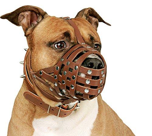 Buy muzzle for pitbull