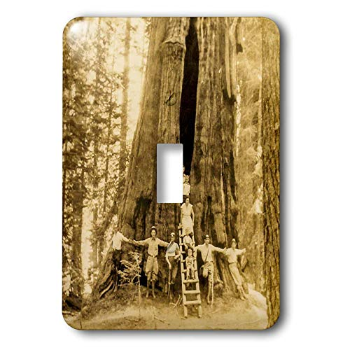 3dRose Scenes from the Past - Stereoview - The Room Tree Sequoia National Park 1930s Scenic America Set Vintage - Light Switch Covers - single toggle switch (lsp_300249_1)