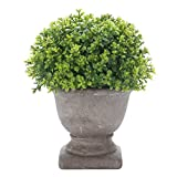 HC STAR Artificial Plant Potted Mini Fake Plant