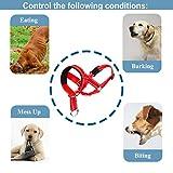 Dog Head Collar, Gentle Leader for