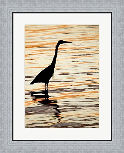 Silhouette of Great Blue Heron in Water at Sunset by Jaynes Gallery / Danita Delimont Framed Art Print Wall Picture, Flat Silver Frame, 19 x 23 inches - Pictures Great Blue Herons