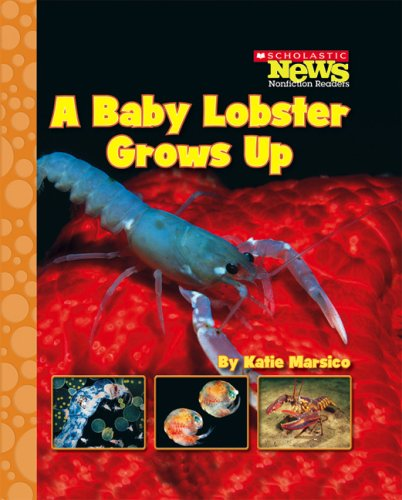 Read Online A Baby Lobster Grows Up (Scholastic News Nonfiction Readers) PDF