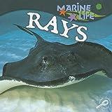 Rays, Lynn M. Stone, 1595154418