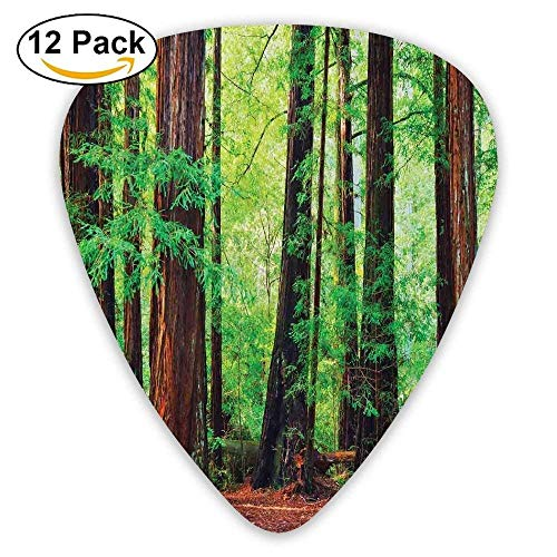 (Redwood Trees Northwest Rain Forest Tropic Scenic Wild Nature Lush Branch Guitar Picks 12/Pack)
