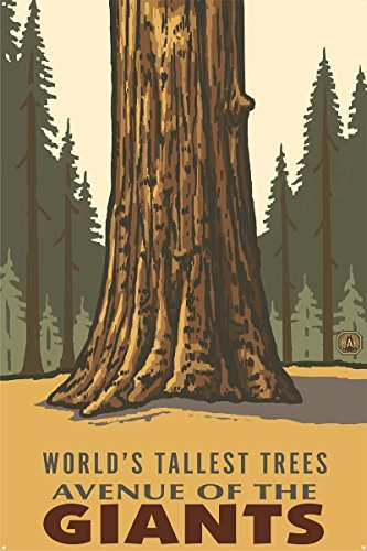 Tallest Trees Ever - Avenue of the Giants Worlds Tallest Trees Redwoods California Metal Art Print by Paul A. Lanquist (24