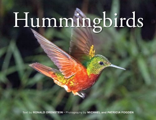 Hummingbirds (Best Plants For Screened Porch)