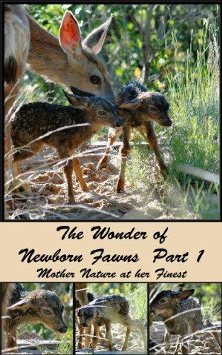 The Wonder of Newborn Fawns  Part 1 (The Colorado Urban Wildlife Series Book 3)