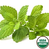 Earthcare Seeds Lemon Balm 500 Seeds (Melissa officinalis) Heirloom - Non GMO - Open Pollinated