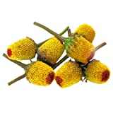 Buzz Buttons Flowers - 4 x 50 Count