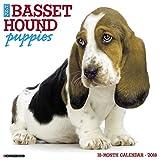 Just Basset Hound Puppies 2018 Calendar