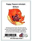 200 Oriental Poppy Flower Seeds. Brilliant Poppies. One Stop Poppy Shoppe® Brand.