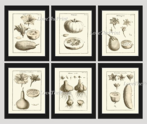 Vegetable Print Set of 6 Beautiful Wall Art Botanical Tomato Eggplant Squash (Antique Green Garden)
