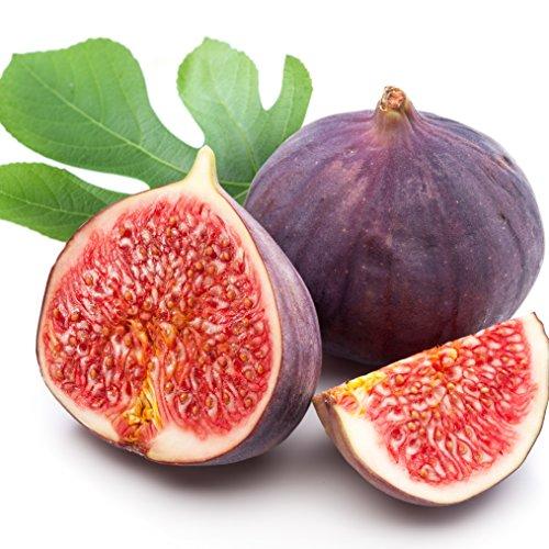 Violette du Bordeaux Fig Ficus Carica Live Plant Negronne Petite Figue de Violet ()