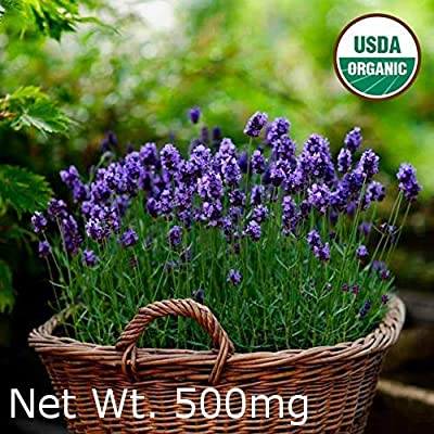 Gaea's Blessing Seeds - English Lavender Seeds 500+ Non-GMO Seeds Organic Purple Open-Pollinated Heirloom Vera 600+mg 91% Germination Rate : Garden & Outdoor