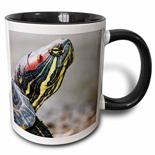3dRose 3dRose tortuga estanque Slider, British columbia-cn02pcl0101–Paul Colangelo–taza de dos tonos de negro,...