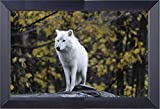 A Lone Aortic White Wolf Alaska Wilderness Canvas Print 17 x 23 Overall Size