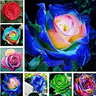 AGROBITS Type10: Semi 50P Multicolore Arcobaleno Rosa perenne Fiore Bonsai casa Brce