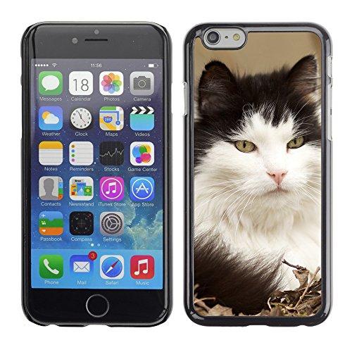"Premio Sottile Slim Cassa Custodia Case Cover Shell // V00003663 norwegian chat des forêts // Apple iPhone 6 6S 6G 4.7"""