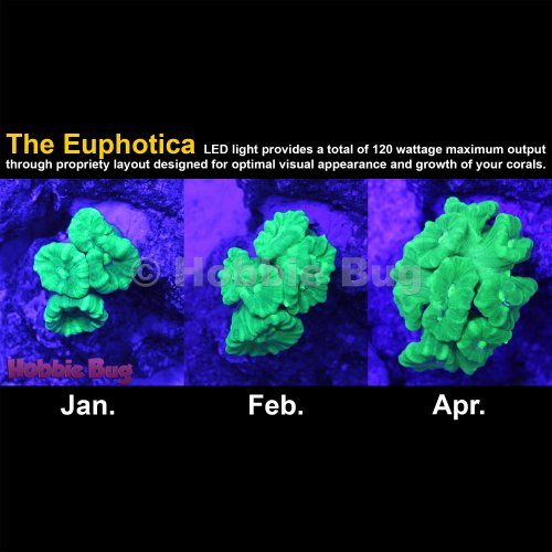 Euphotica 16 Quot Led Aquarium Light Dimmable Full Color