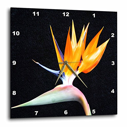 - 3dRose dpp_50971_3 Tropical Bird of Paradise-Wall Clock, 15 by 15-Inch