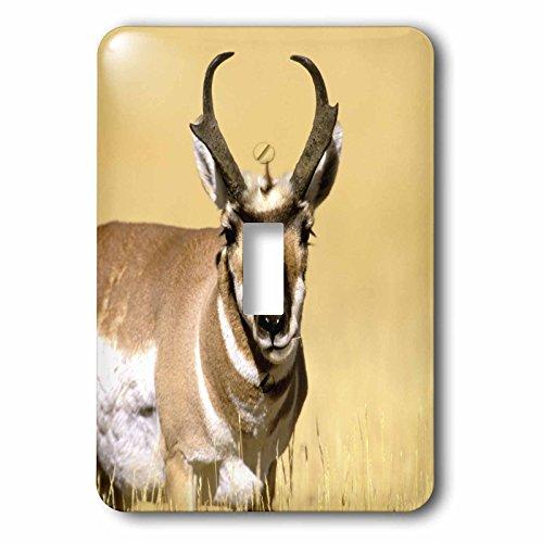 3dRose LLC lsp_97636_1 Us Wyoming Yellowstone Np Pronghorn Wildlife Us51 Tve0012 Tom Vezo Single Toggle Switch