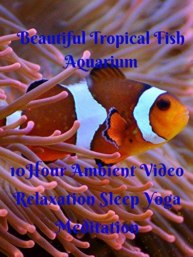 beautiful-tropical-fish-aquarium-10-hour-ambient-video-relaxation-sleep-yoga-meditation