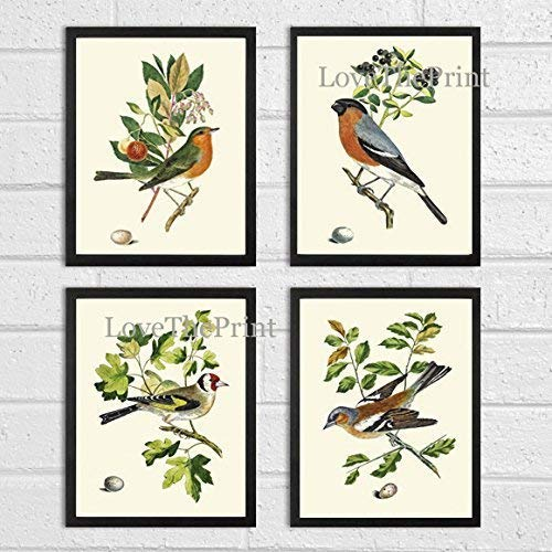(Bird Print Set of 4 Prints Antique Art Beautiful Colored Colorful Natural Science Summer Garden Nature Fruit Berries Tree Branch Leaf Home Room Wall Decor Unframed CJ)