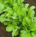 David's Garden Seeds Arugula D2891 (Green) 500 Organic Seeds