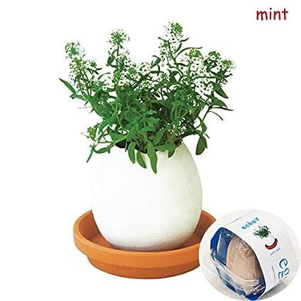 Bluelover Créatif Bricolage Oeuf Chance Mini En Pot Usine Bureau Bureau Home Decor -02