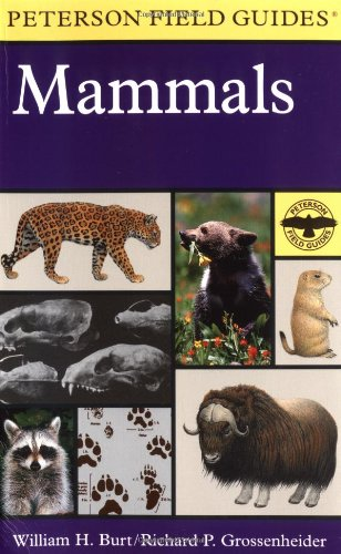 A Field Guide to the Mammals: North America North of Mexico (Peterson Field Guide Series)