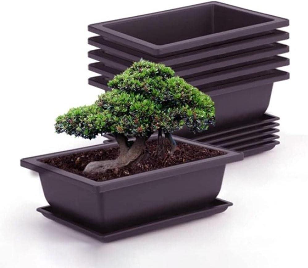 6 macetas de entrenamiento para bonsái con bandeja