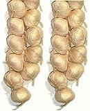 Neuhaus Decor 2 x 20 Garlic Strings, Artificial