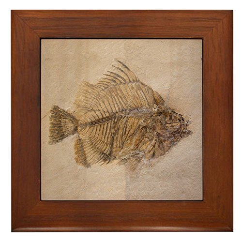 CafePress - Fish Fossil 2 Art Framed Ceramic Tile - Framed Tile, Decorative Tile Wall - Decor Tile Quality Ceramic Framed