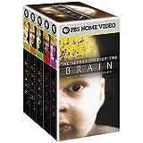 Secret Life of Brain