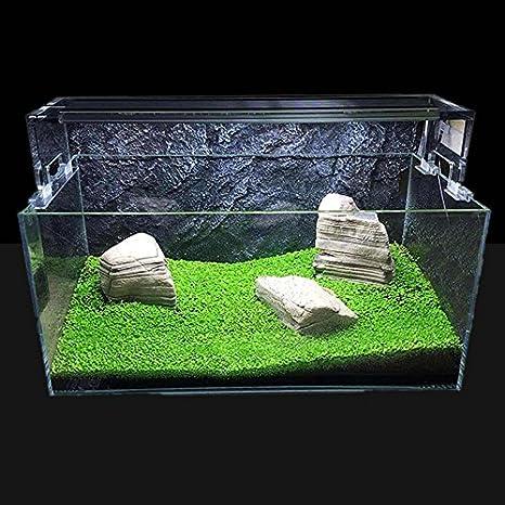 Sinotech Plantas de acuario – Semillas acuáticas fáciles de cultivar en vivo plantas peceras decoración de acuario