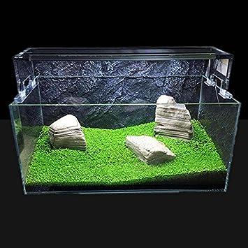 1pcs - Semillas de plantas acuáticas fáciles de cultivar para decoración de peceras: Amazon.es: Jardín