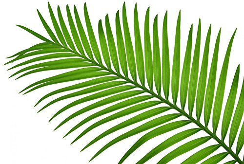 Wallmonkeys Sago Palm Leaf Wall Decal Peel and Stick Graphic WM269962 (18 in W x 12 in H) -