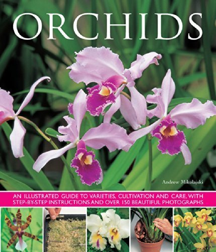 07 Orchid - 1