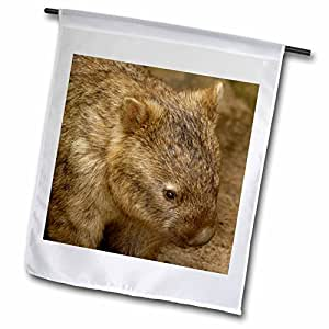 3dRose fl_73392_1 Common Wombat, Marsupial, Australia Pete Oxford Garden Flag, 12 by 18-Inch