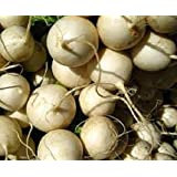 Tokyo Cross Turnip 100 seeds