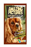 Amazing Pictures and Facts About Cavalier King Charles Spaniels: The Most Amazing Fact Book for Kids About Cavalier King Charles Spaniels (Kid's U)