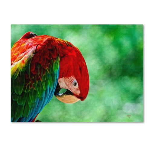 picture of Trademark Fine Art Colorful Macaw Canvas Wall Art by Lois Bryan, 14 by 19-Inch