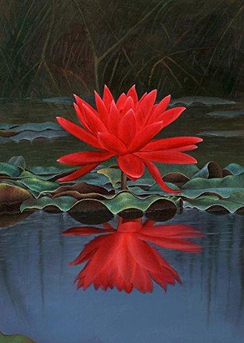 Bee Garden Indian Red Lotus Seeds 10 Pcs Amazonin Garden Outdoors