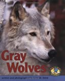 Gray Wolves (Early Bird Nature) (Early Bird Nature Books)