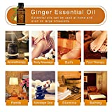 Ginger Massage Oil, 100% PURE Natural Lymphatic