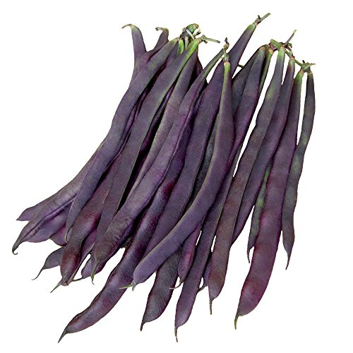 Burpee Trionfo Violetto Pole Bean Seeds 30 g (Best Tasting Stringless Pole Beans)